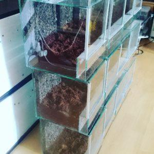 Nowe pojemniki dla pająków